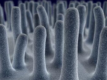 Wie Sich Die Darmflora Nach Antibiotika Einnahme Erholt Internisten